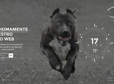 Foto ejemplo Perros